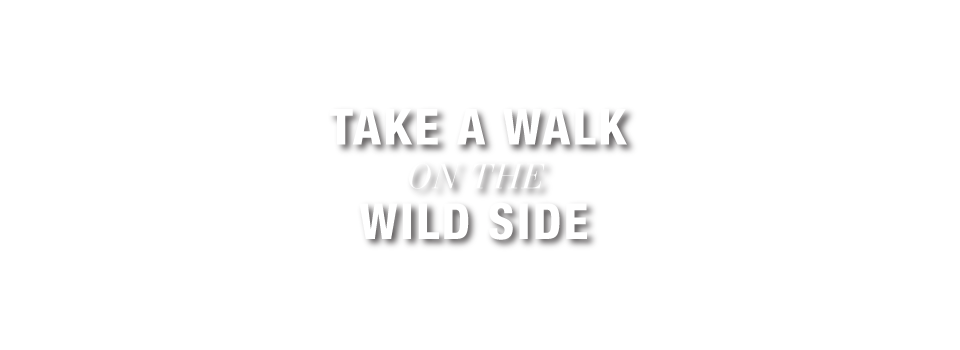 Take a walk on the wild side - Tasso Hostel Florence